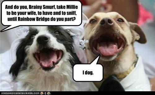 dogs I Do love marriage wedding - 6252720896