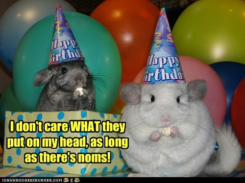 birthday party eating food hamsters hats head i dont care noms