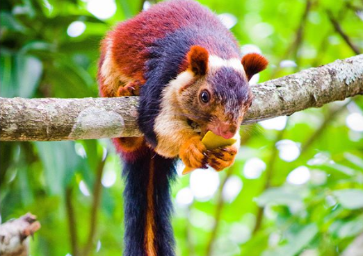 animal photos photos squirrel india colorful rainbow animals - 6253061