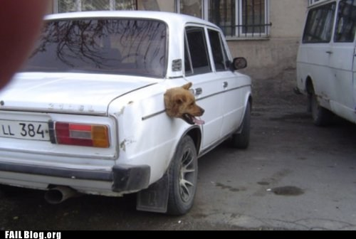 car,dogs,gas tank,head