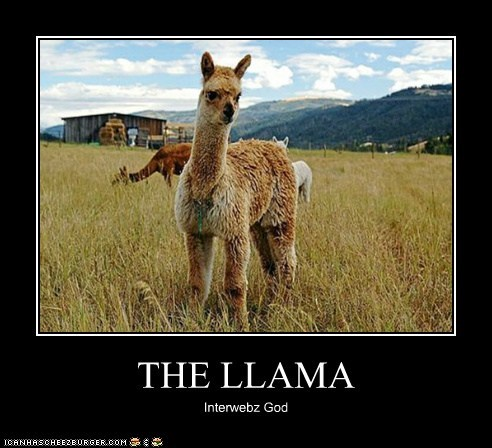 THE LLAMA Interwebz God