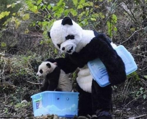 morning fluff,panda
