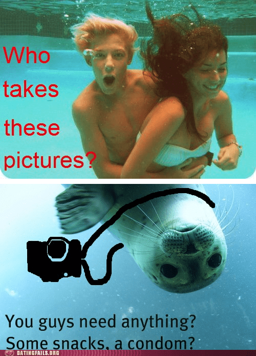 awkward seal underwater you need anything - 6253158144