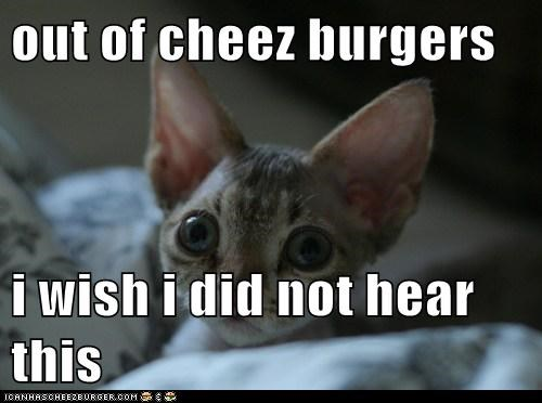 Cheezburger Image 6253289472