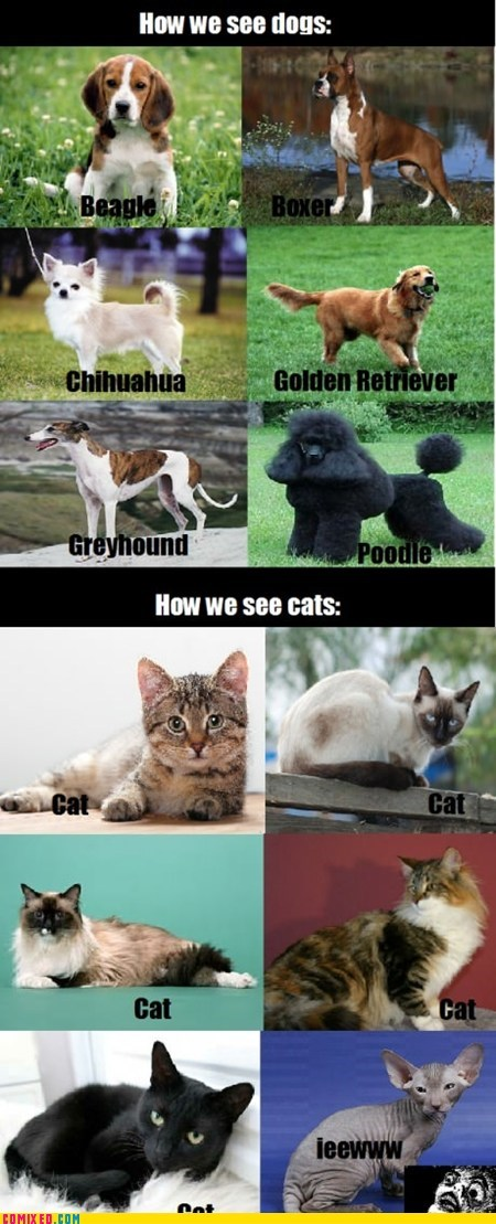 breeds,dogs vs cats,hairless cats,the internets
