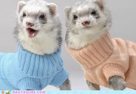cozy ferrets Hall of Fame knit sweater turtle neck