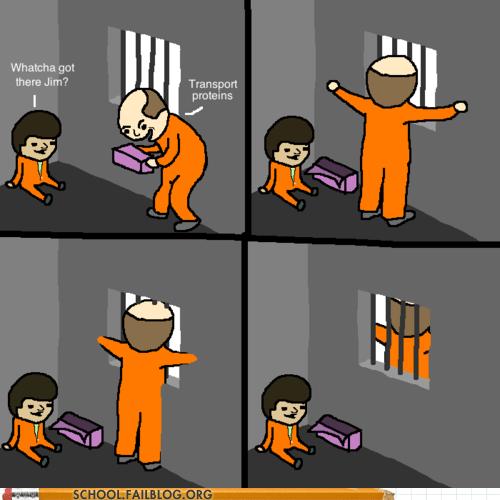 melt through walls prisoners transport proteins - 6253451520