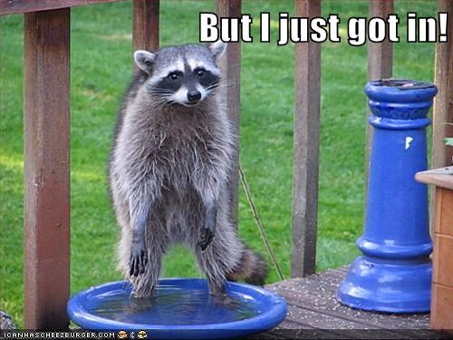 disappointment effort kicked out raccoon Sad