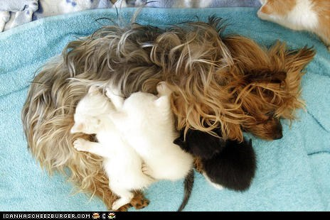 Cats,dogs,goggies,goggies r owr friends,kitten,mama,moms,news,surrogate