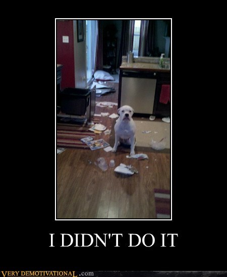 dogs hilarious jerk mess wtf
