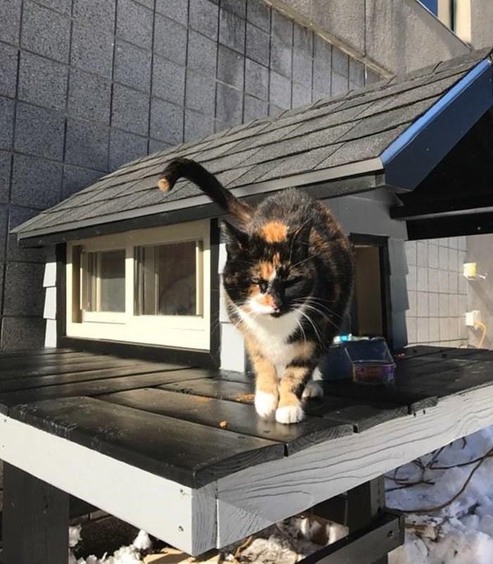 cops police station stray cat visit boston condo build - 6253829