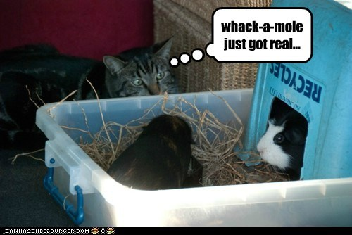 Lolcats - whack a mole - LOL at Funny Cat Memes - Funny cat pictures with  words on them - lol | cat memes | funny cats | funny cat pictures with