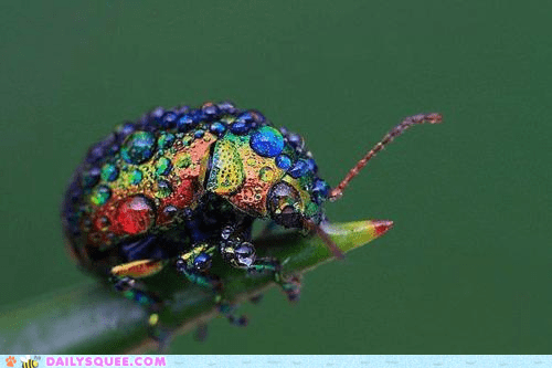 bugs,dew drops,Hall of Fame,insects,rainbow,rainbows,squee,water,whatsit wednesday