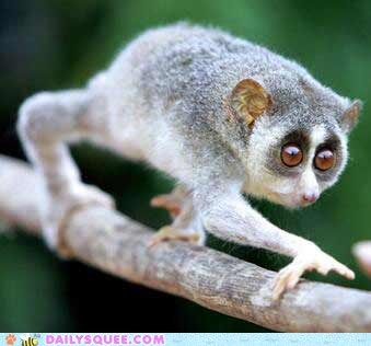 climbing trees,loris,squee spree