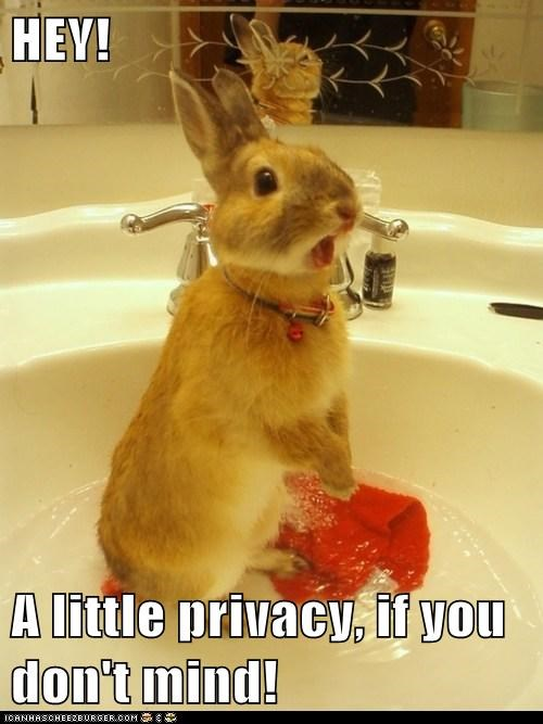 bath,bathroom,bunny,get out,privacy,surprise,washing