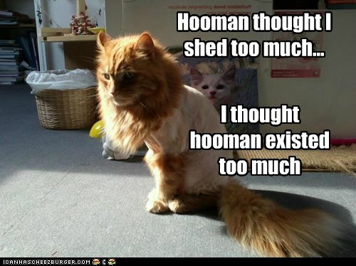 Hooman thought I shed too much... I thought hooman existed too much