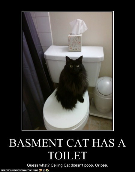 BASMENT CAT HAS A TOILET Guess what? Ceiling Cat doesn't poop. Or pee.