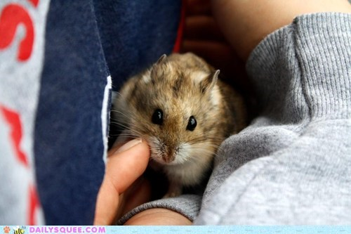 cuddle hamster pet reader squee tiny
