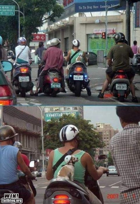 car,cute,helmet,motorcycle,pets,ride,safety first