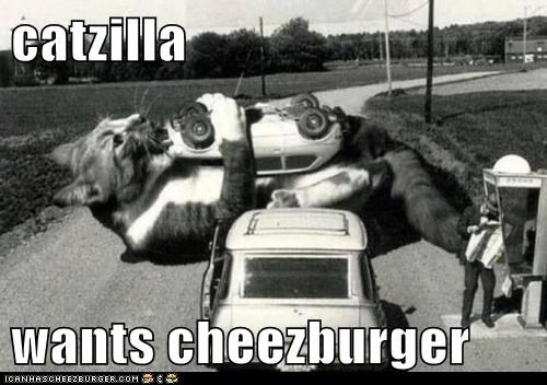 Cheezburger Image 6254840064