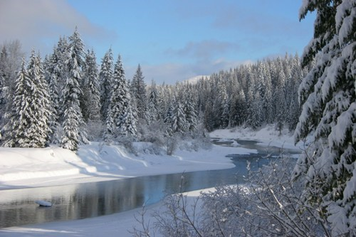 Forest Idaho river snow - 6255217152