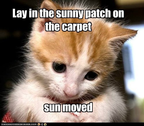 Lay in the sunny patch on the carpet sun moved