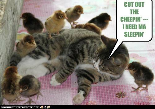cat chicks sleep - 6255844864
