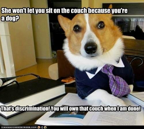 Lawyer Dog - 6256129536
