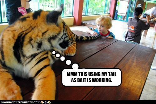 bait,eating,kid,success,tail,tiger,working