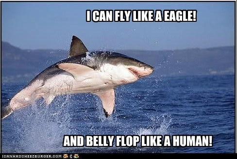 belly flop Close Enough eagle flying graceful human leaping shark