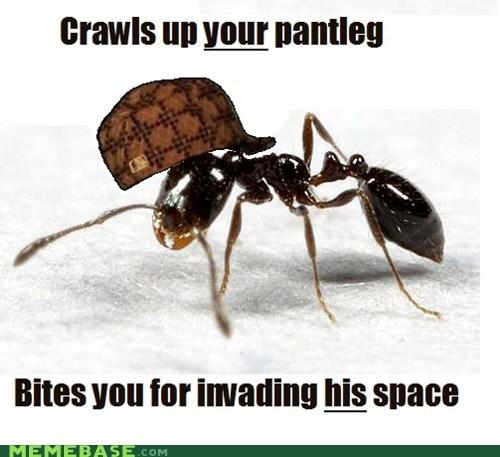 ant look around you Scumbag Steve thanks - 6256514816