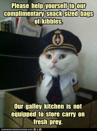 Captain Kitteh captains Cats food Memes pilots planes snacks - 6256528640