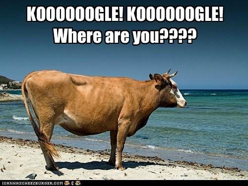 KOOOOOOGLE! KOOOOOOGLE! Where are you????