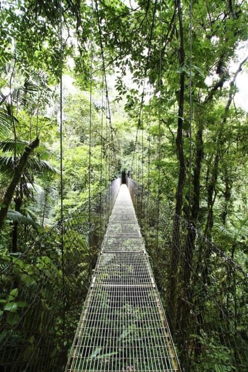 bridge costa rica island jungle suspension - 6256961536