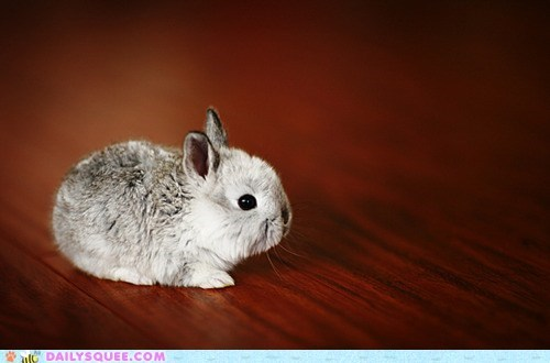bunny,happy bunday,itty bitty,tiny