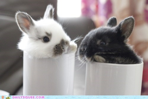 bunnies,coffee,cream,cups,happy bunday,mugs,squee