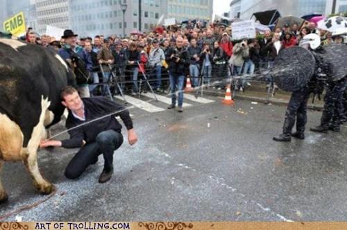 cops cow IRL milk Protest - 6257044736