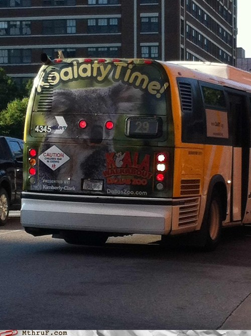 ad fail,advertisement,advertisement fail,bus,bus advertisement,koala,koalaty time,quality time