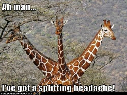 giraffes,headache,hurt,optical illusion,puns,splitting,three heads