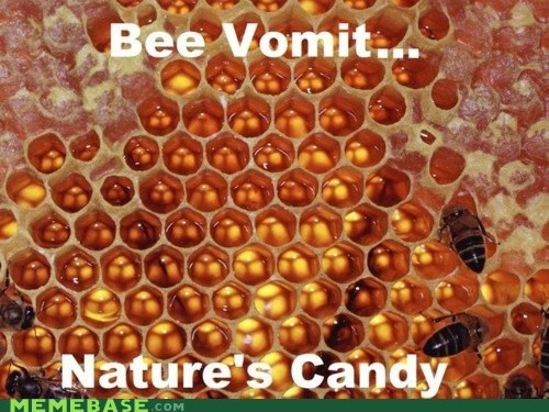 bees BEES ARE THE BEST candy humans Memes nature vomit - 6257651200