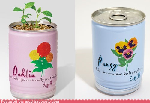 can,dirt,flowers,grow,plant