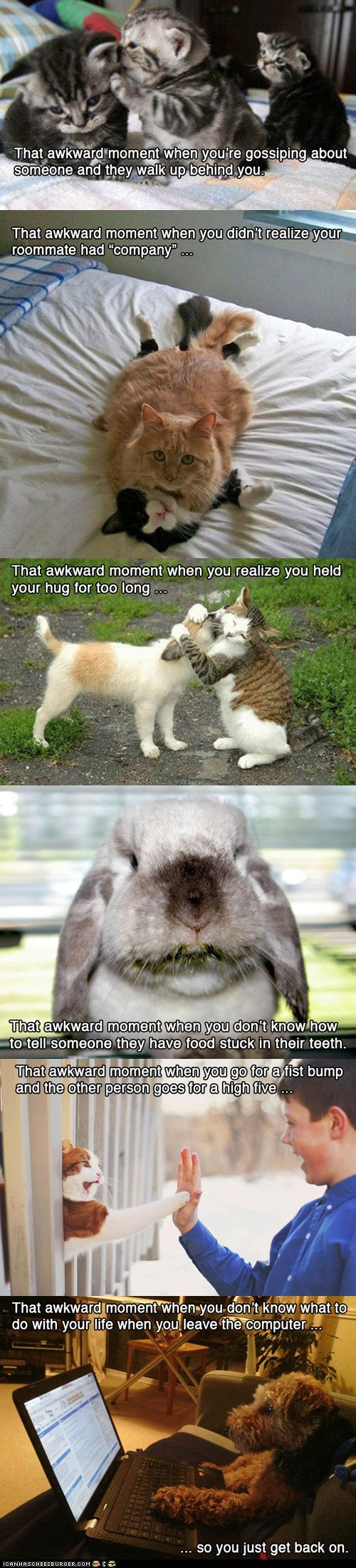 Awkward,bunnies,Cats,dogs,life,multipanel,social situations,socially awkward