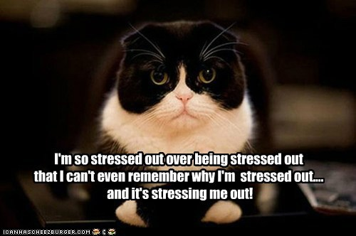 Meme Don T Stress Funny : I'm so stressed out over being stressed out that i can't even