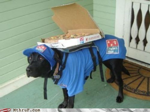 delivery,delivery dog,dogs,dominos,dominos-pizza,pizza,pizza delivery
