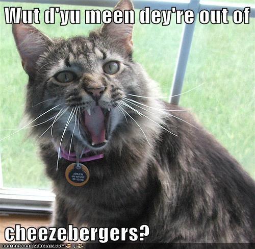 Cheezburger Image 6258451968