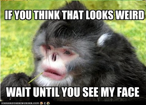 butt,Cannot Be Unseen,captions,face,gross,monkey,monkeys,ugly,wait,weird