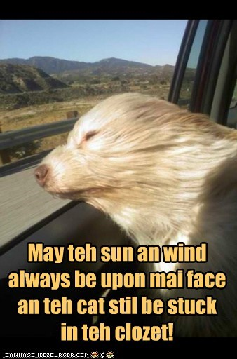 car dogs what breed wind wish