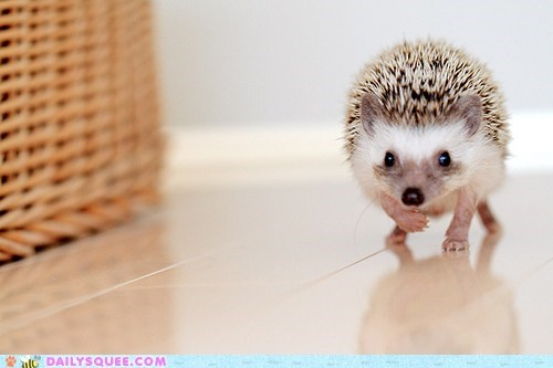 cute Hall of Fame hedgehog hunting spines squee - 6258823424