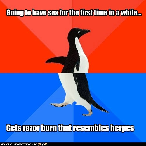 socially awkward socially awkward penguin