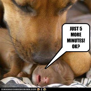 dogs five more minutes mommy puppy sleepy what breed - 6259441664